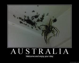 australia-spiders