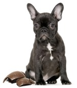 French-Bulldog-Easter-Chocolate-Egg